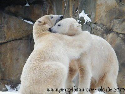 Fotos von Knut und auch Gianna ab Januar 2010