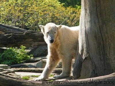 Fotos von Knut ab April 2009