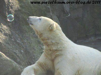 Album - Knut von Januar bis März 2011