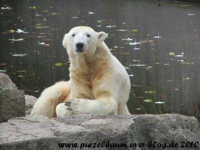 Album - Knut Oktober bis Dezember 2010