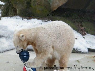 Meine Bilder von Knut Januar bis März 2009