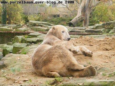 """Bilder von Knut, die ich im Laufe des Jahres 2008 """"geschossen"""" habe"""