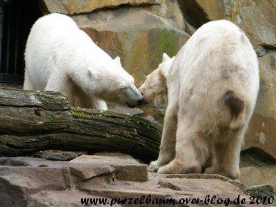 Fotos von Knut und Gianna ab April 2010