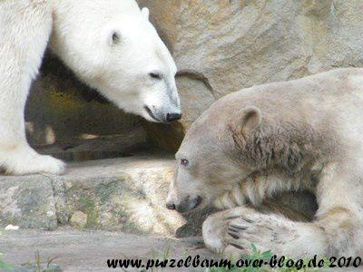Fotos von Knut und Gianna ab Juli 2010