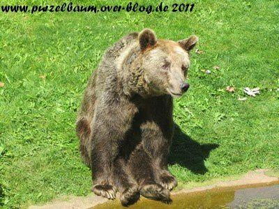 Album - Zoo Berlin