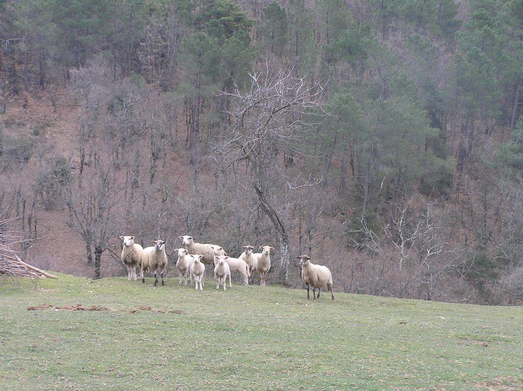 Balade autour de Rompon, à la recherche des sources....20 mars 2010