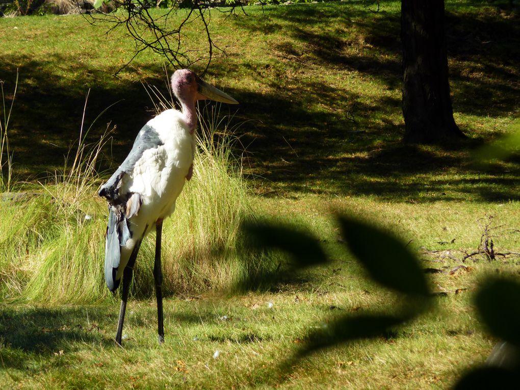 Album - Bronx Zoo