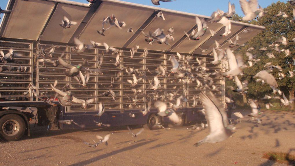 Pierre Duranceau  a eu la gentillesse de nous faire partager les photos des camions anglais ( lacher de la reine) a Saintesmerci