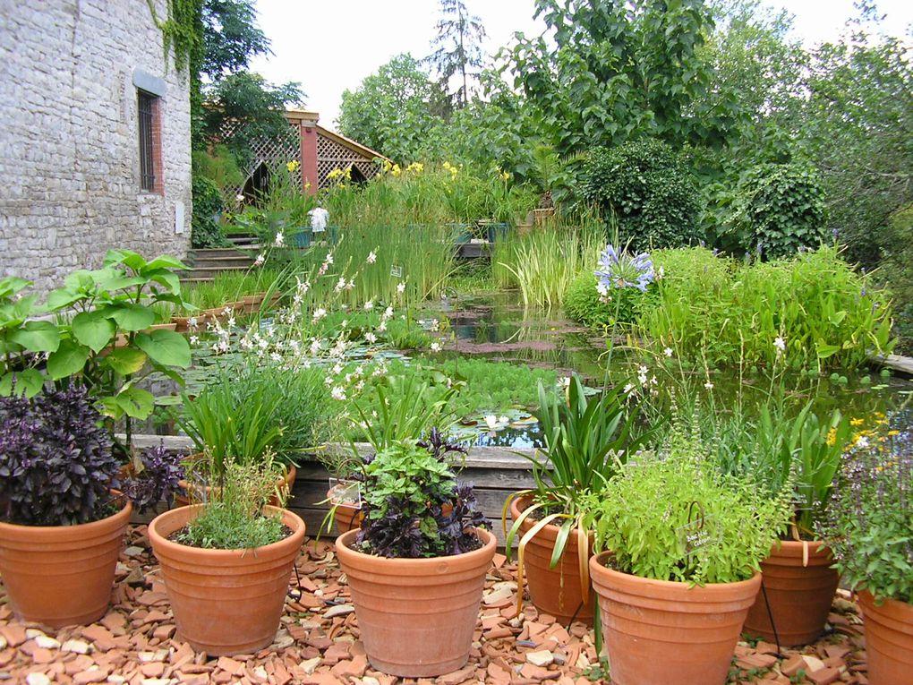 Un jardin du sud, jardin de senteurs, tapis de fleurs, bassin d'eau.