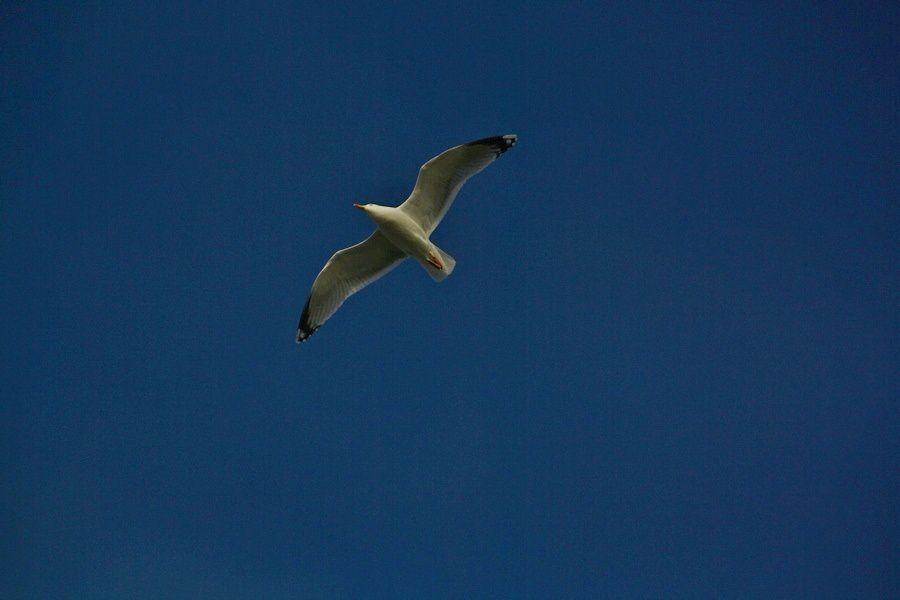 Oiseaux-de-Mer