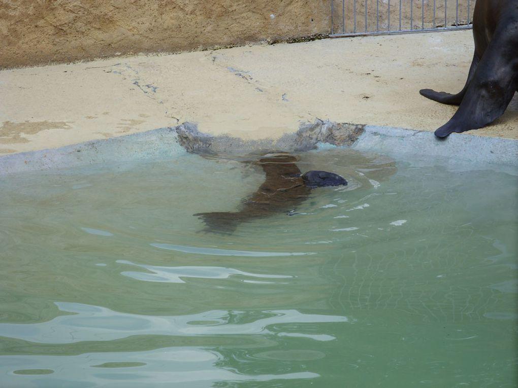 Wir waren am 09.08.2009 in Heidelberg im Tierpark... es war echt schön!