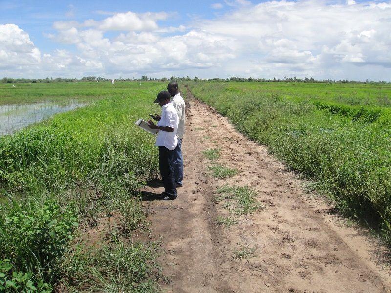 Arrivée à Ndombo. Le travail débute pour de longues heures...