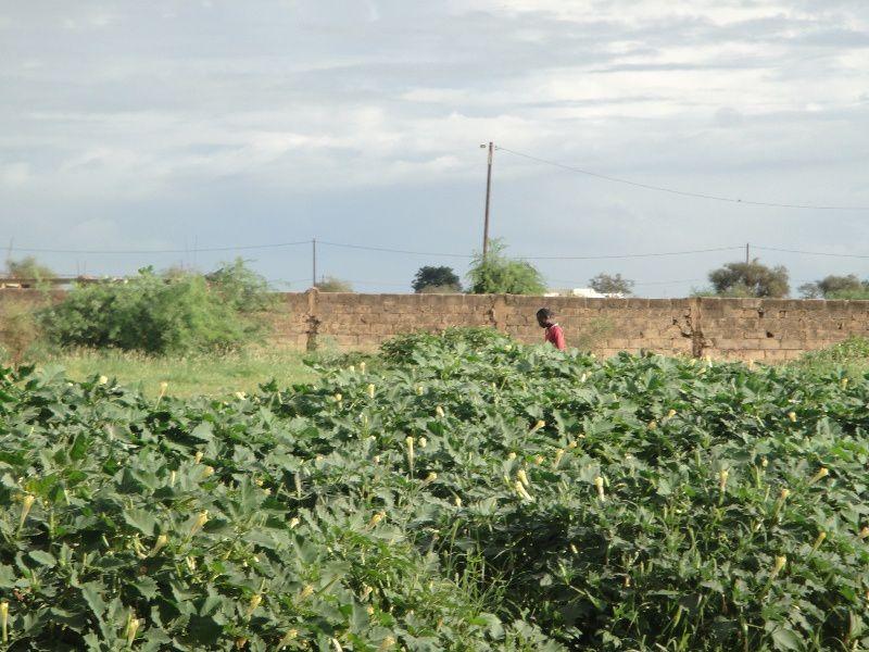 Arrivée à Mbane. Le travaille débute pour de longues heures.