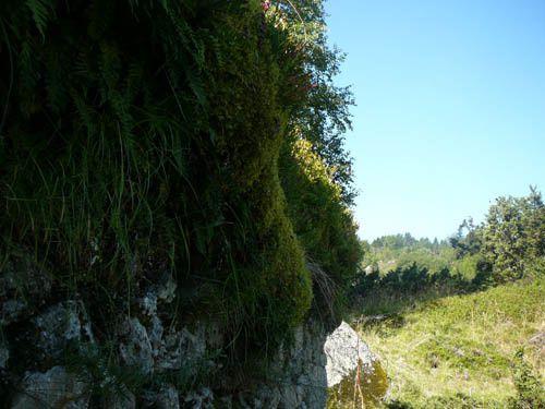 chemin de courtal gelat bas à courtal gelat haut puis au ruisseau de llégunes et à gérieys