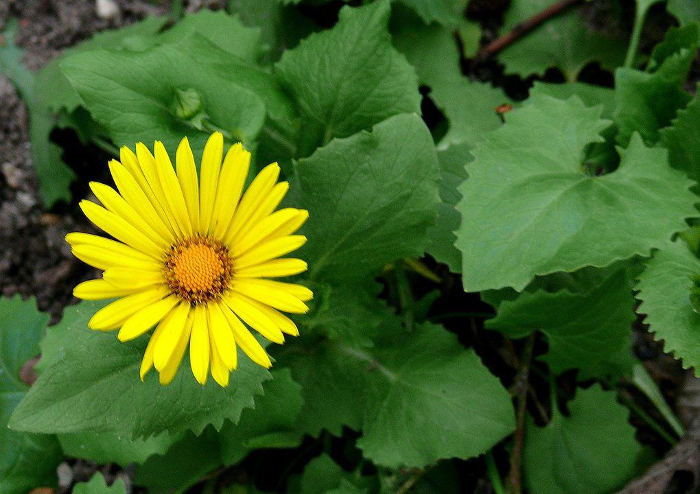 Hier werden alle Pflanzen auf unserem Grunstück ein schönes Plätzchen finden!