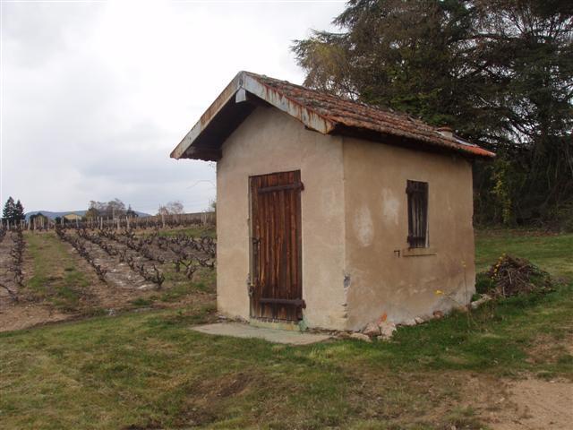 """""""cadole"""" nom donné aux cabanes de vignerons parsemées dans les vignes beaujolaises &#x3B; ici à lantignié"""