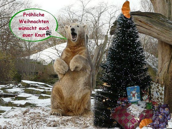 Album - adventskalender-2