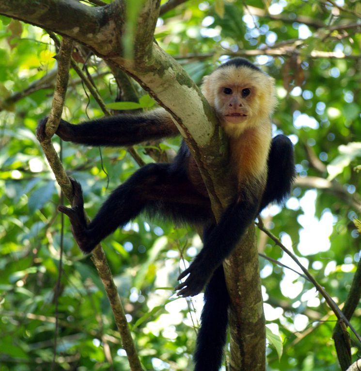 Album - Costa Rica
