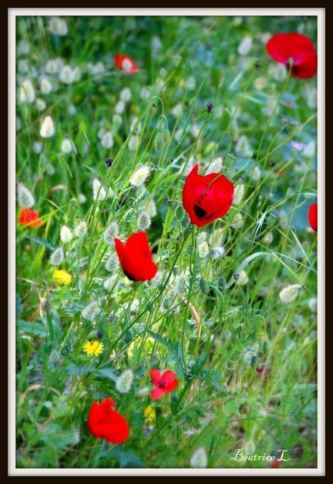 Lors d'un voyage en Grèce, Béatrice a photographié ces fleurs pour le Jardinier de Dieu