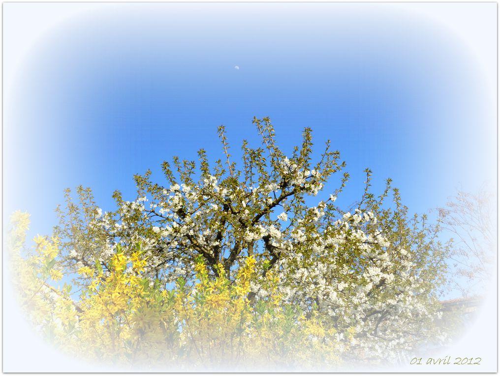 Album - Prière : Merci pour le printemps