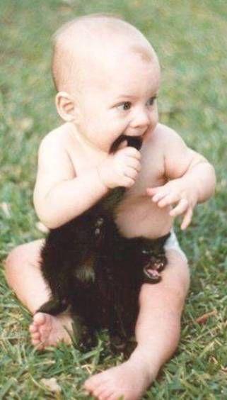 photo de chats