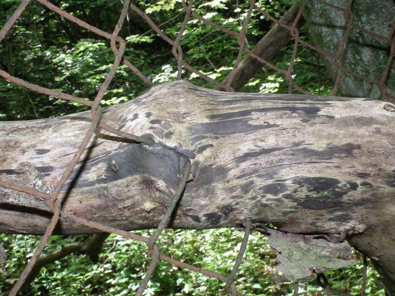 algrange bois