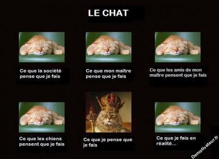 chats humour