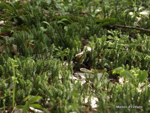 Plantes et fleurs sauvages identifiées après un bon repas