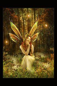 De très belles illustrations de fées, de dragons et de tous les peuples de l'imaginaire
