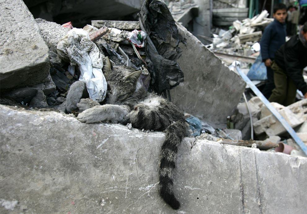 Encore des massacres sur Gaza