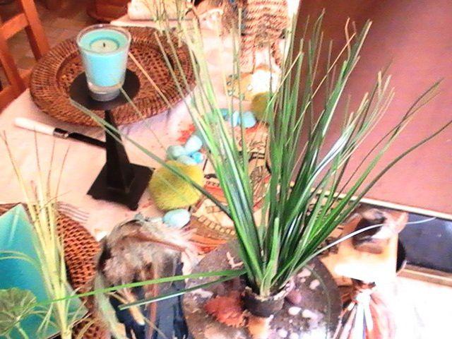 Album - Table-Sous l oeil de Râ
