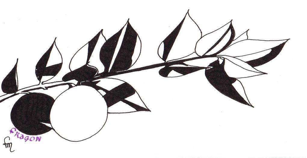 Album - Noir---blanc