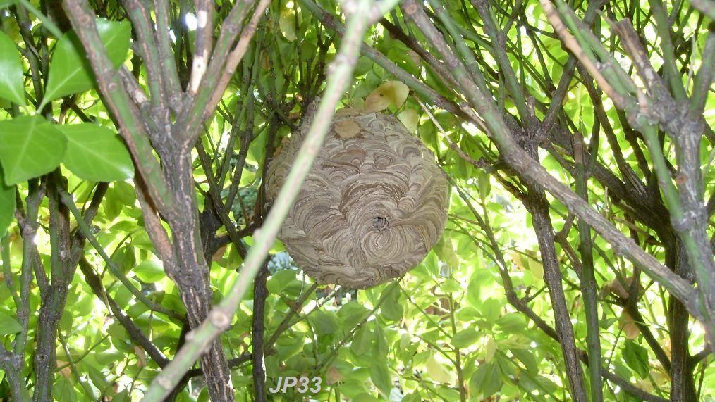 Exemple de nids d'accés facile et présentant un danger réel pour l'homme !