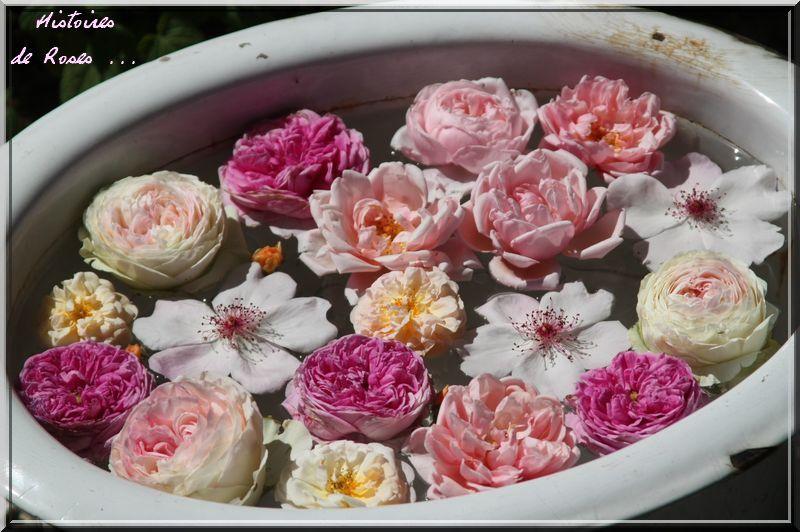 Album - Roses