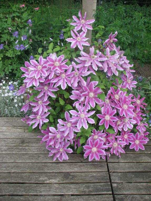 Fleurs offertes ou du jardin