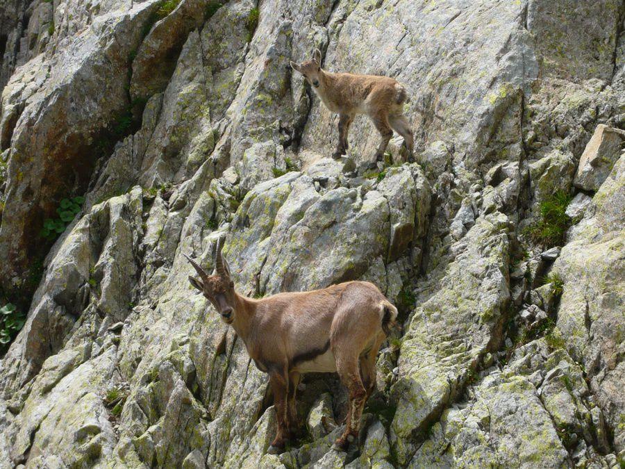 Album - Montagne-rocher