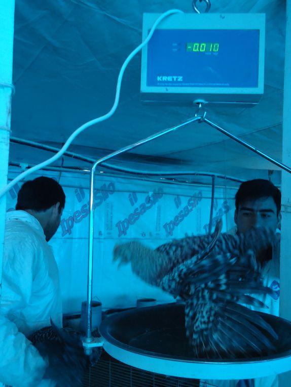 Control de peso realizado el día 11 de agosto de 2011 a cargo del M. Vet. Facundo Macias, con los ayudantes de campo Zlatanoff Orlando y Maldonado José Luis