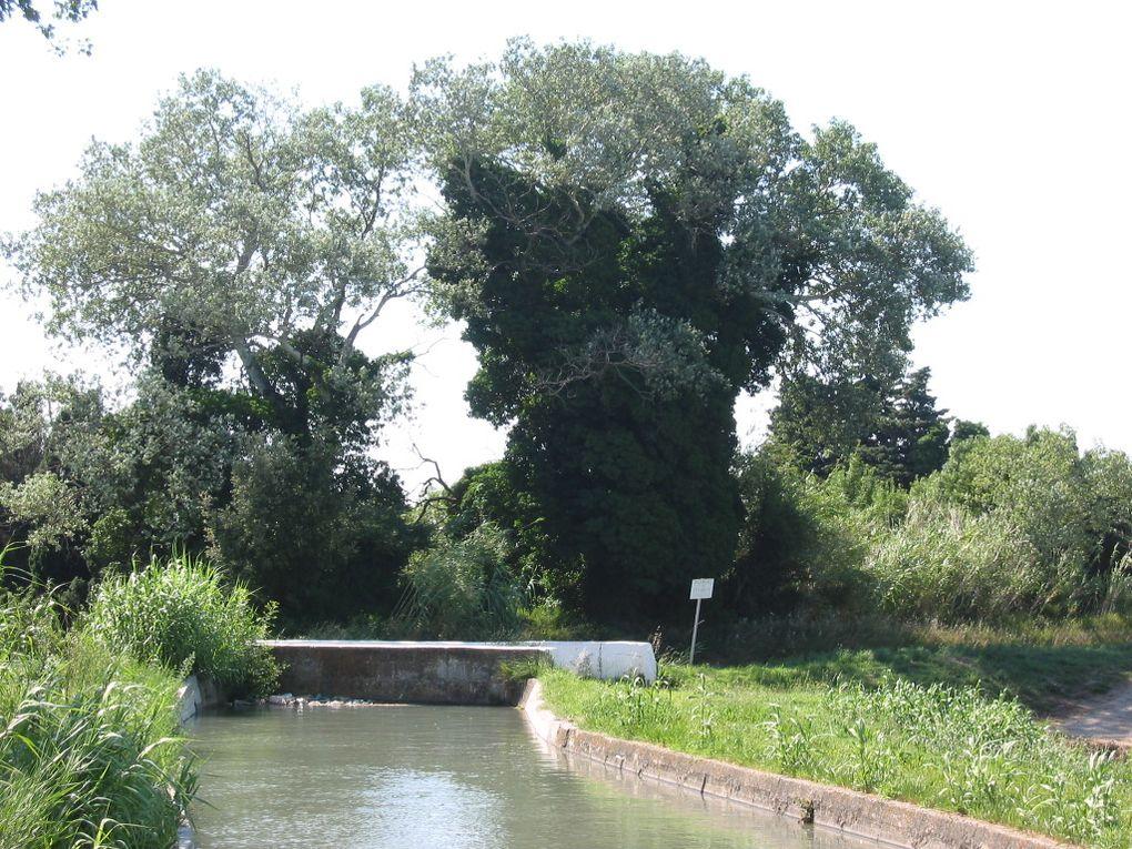 Album - Canal de Craponne- Branche d'Arles - Pont de Moules à Pont de Rabet