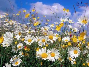De très belle photos de fleur