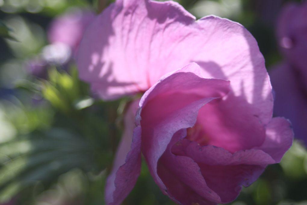 Album - Fleurs de mon Jardin
