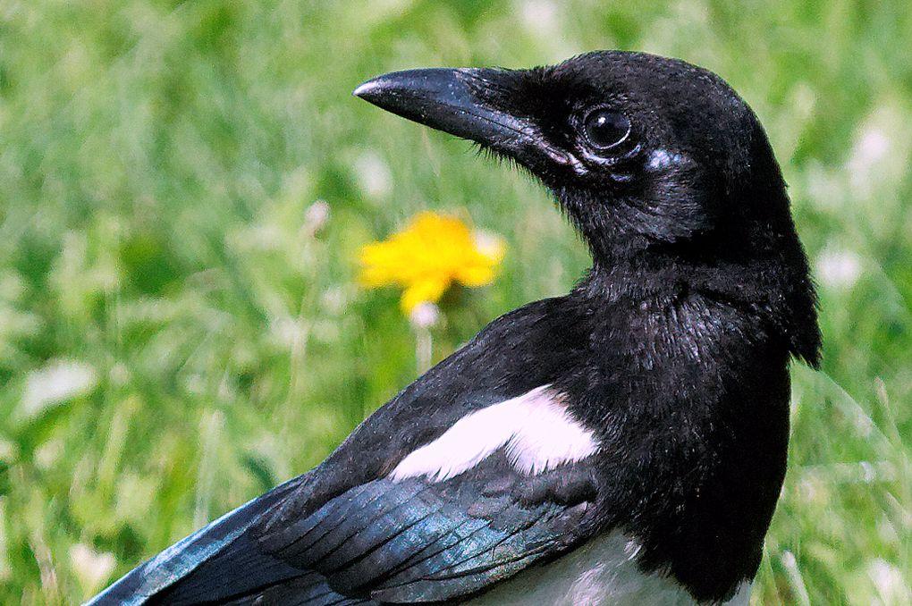 Mes oiseaux depuis l'origine de ce bog