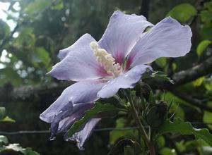 Les fleurs du jardin et aux environs