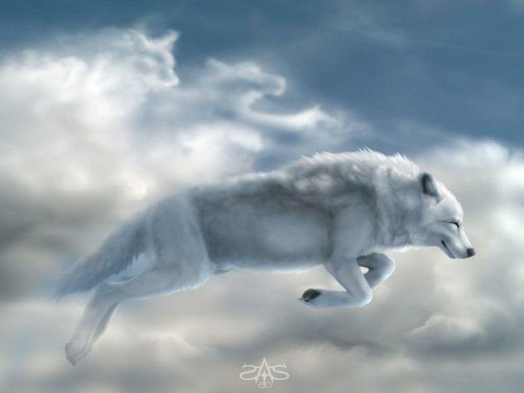 Album - NOVEMBRE 2010