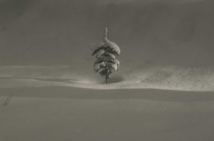 Album - Forêt