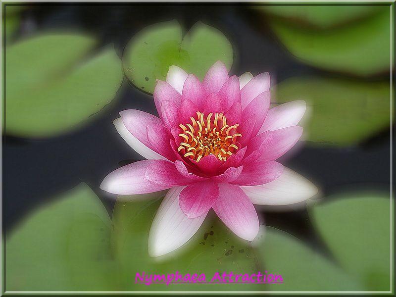 Album - Lotus
