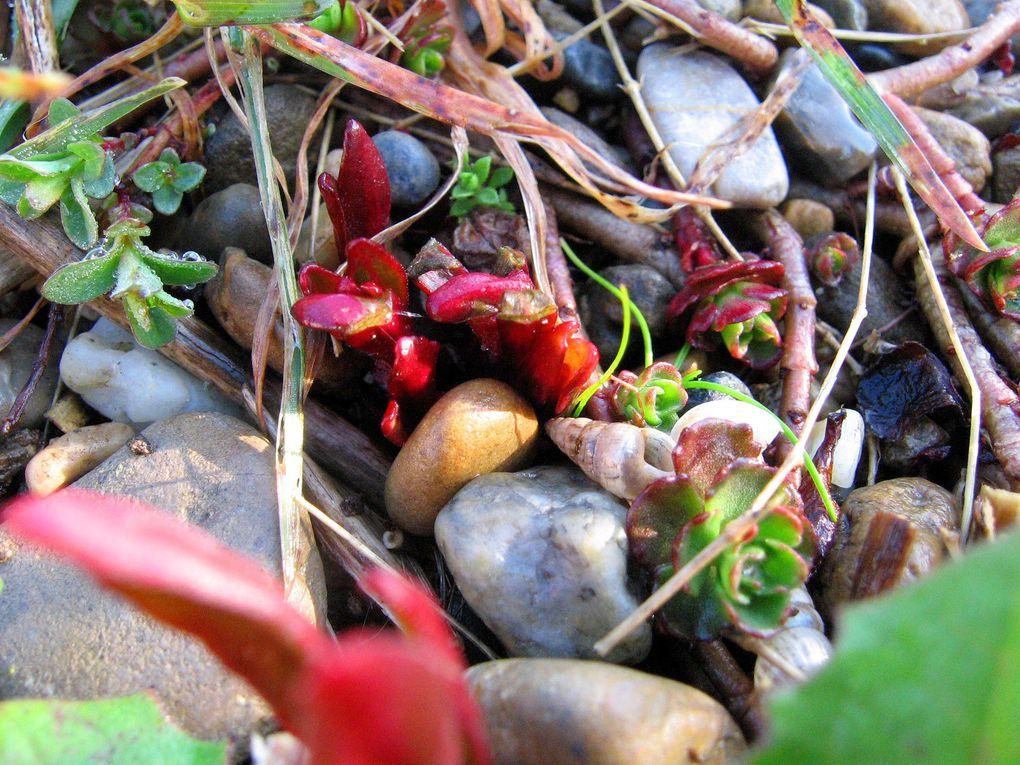 Cactées et succulentes présentes dans mon jardin ou ma maison.