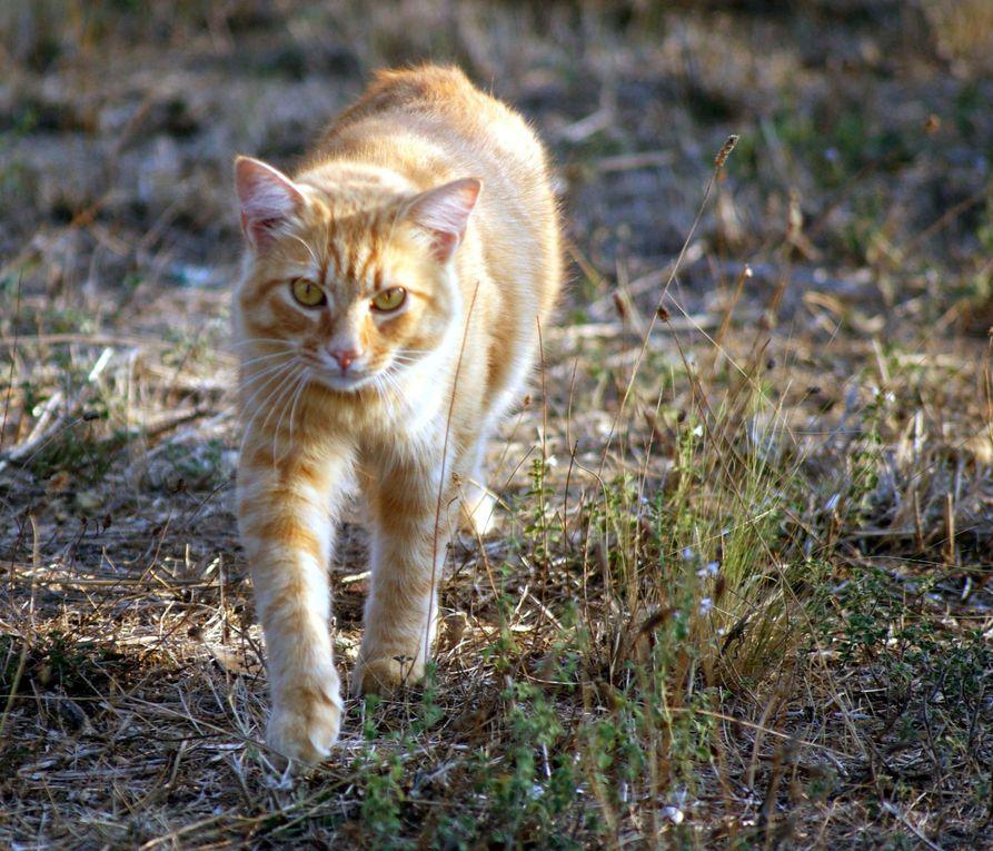 Chiens et chats divers rencontrés ou gardés chez moi... ou en visite !!