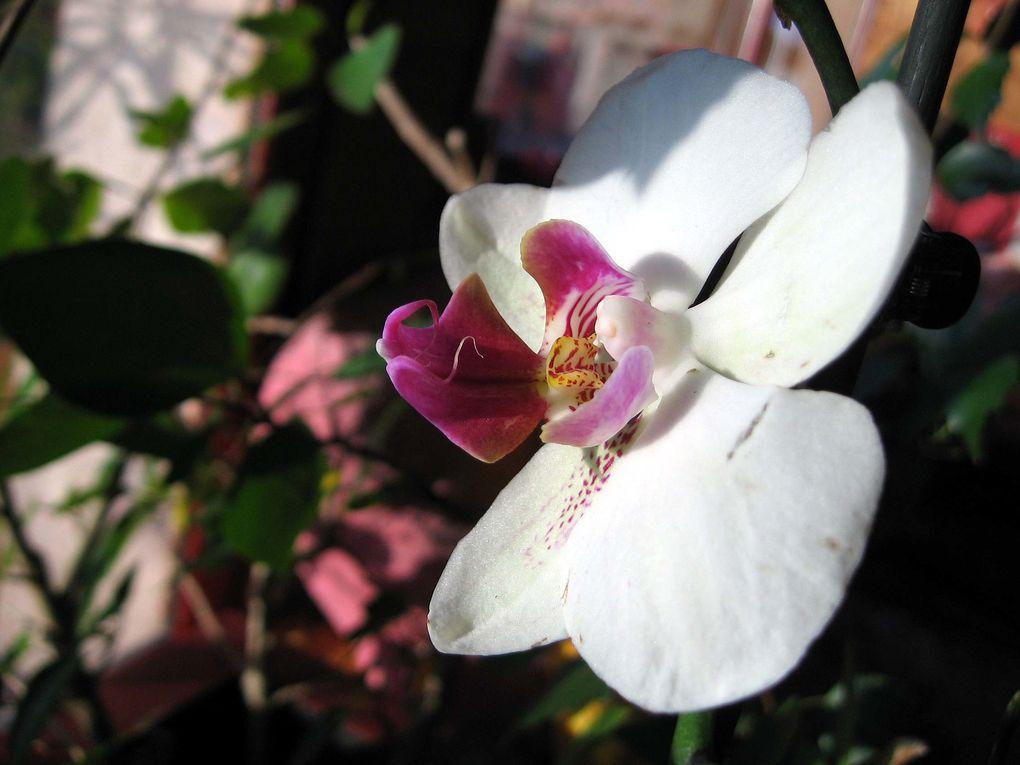 Photos diverses de fleurs et plantes de mon jardin, pour la plupart... en toutes saisons.
