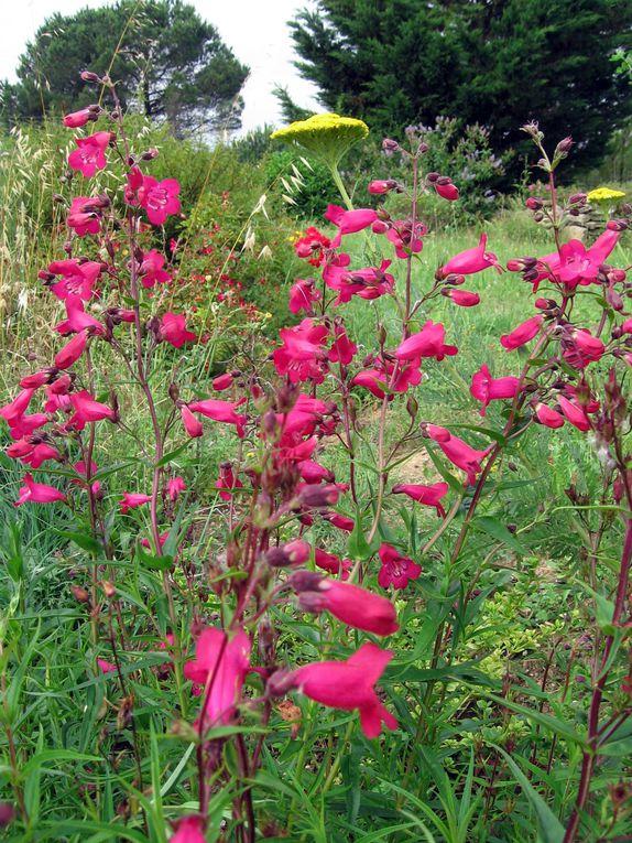 Les plantes et fleurs de mon jardin