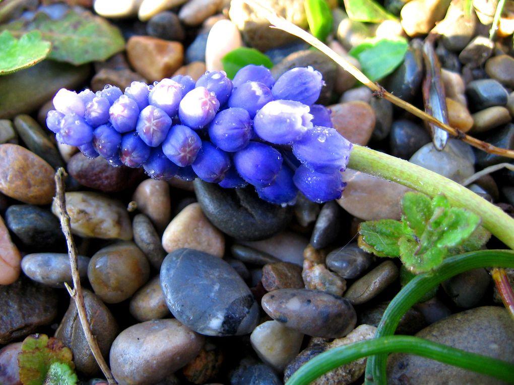Fleurs et plantes diverses
